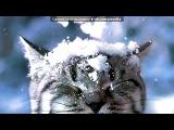 «Кошки и романтика» под музыку Нотр-Дам де Пари - Бель (на французском). Picrolla