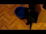 Кошки не любят воду?!